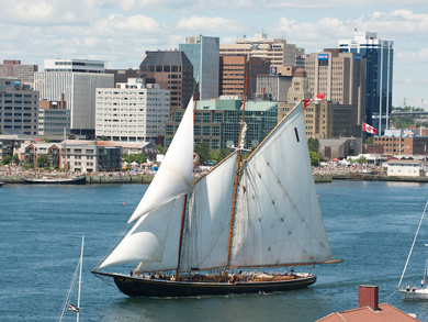 The Bluenose II schooner entering port under full sails; office towers and tall building are in the background